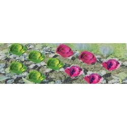 zelený salát a červené zelí, cca 5 mm hlávky, celkem 20 ks