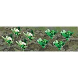 květák a brokolice, cca 5 mm hlávky, celkem 20 ks