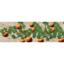 dýně, 6 rostlin cca 3.5 cm dlouhých a 15 plodů
