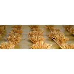 drny - zralé obilí, výška cca 1 cm, 30 ks