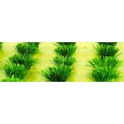 drny zelené, výška cca 1 cm, 30 ks