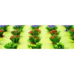 drny kvetoucí, výška cca 1 cm, 30 ks