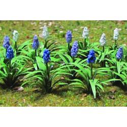 hyacint, výška 1 cm, 32 ks