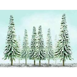 zasněžený jehličnan úsporný, výška 2.5 - 5 cm, 55 ks