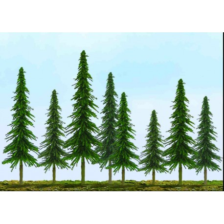 smrk úsporný, výška 5 - 10 cm, 36 ks