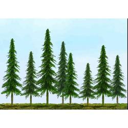 smrk úsporný, výška 10 - 15 cm, 24 ks