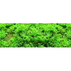 listoví jemné - zeleň světlá, 0.1m2