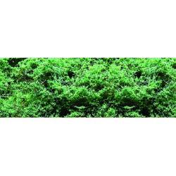 listoví jemné - zeleň střední, 0.1m2