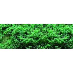 listoví jemné - zeleň tmavá, 0.1m2