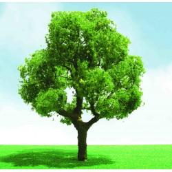 listnatý strom výběrový, výška 8 - 9 cm, 2 ks