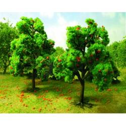 Meruňka (pomerančovník), výška 11 - 13 cm, 2 ks