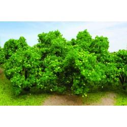 jabloň (citroník), výška cca 5 cm, 6 ks