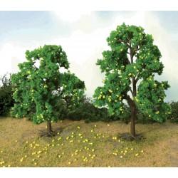 Jabloň (citroník), výška  11 - 13 cm, 2 ks